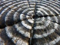 Деревянная предпосылка текстуры Стоковое фото RF