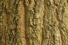Деревянная предпосылка Стоковые Изображения
