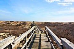 Деревянная прогулка моста над защищенными песчанными дюнами стоковая фотография