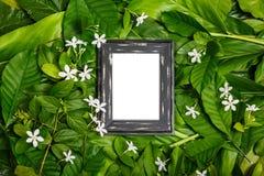 Деревянная рамка на зеленых лист Стоковое фото RF