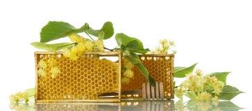 Деревянная рамка с сотом пчелы, ветвью липы изолированной на белизне Стоковые Фотографии RF