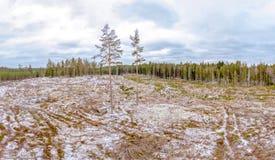Деревянная расчистка в Ostergotland стоковое изображение
