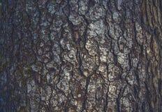 Деревянная расшива Текстура расшивы Стоковые Изображения
