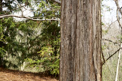 Деревянная расшива Стоковые Фотографии RF
