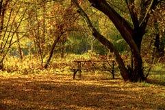 Деревянная скамья в дезертированном парке осени стоковое изображение