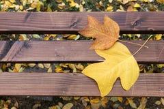 Деревянная скамья в парке, на котором ложь 2 листь осени стоковое фото