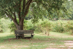 Деревянная скамья в саде Стоковое Изображение