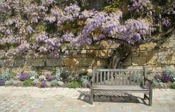 Деревянная скамья и дерево Стоковое Фото