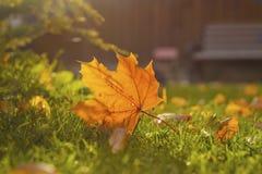 Деревянная скамья на лужайке Стоковые Фотографии RF