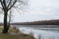 Деревянная скамья около дерева и замороженного реки Стоковое Фото