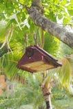 Деревянная смертная казнь через повешение дома птицы на дереве Стоковые Изображения