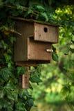 Деревянная смертная казнь через повешение birdhouse на дереве Стоковое Изображение