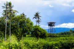 Деревянная станция платформы башни бдительности в лесе высокая деревянная башня бдительности в лесе стоковое фото rf
