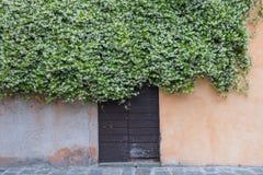 Деревянная старая дверь предусматриванная путем взбираться жасмин вполне белого цветка Стоковая Фотография RF