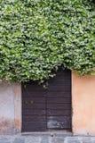 Деревянная старая дверь предусматриванная путем взбираться жасмин вполне белизны, flowe Стоковое фото RF