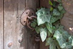 Деревянная старая дверь и ржавый padlock перерастанные с плющом Стоковое фото RF
