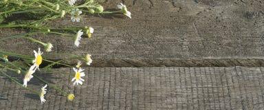 Деревянная старая доска с букетом стоцветов поля стоковые изображения