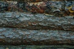 Деревянная стена журналов сельской предпосылки дома Стоковая Фотография RF