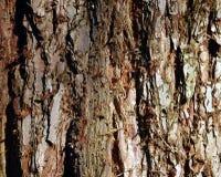 Деревянная структура Стоковое Изображение
