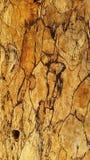 Деревянная структура Стоковые Изображения