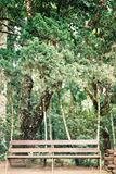 Деревянная табуретка с природой Стоковое Изображение RF