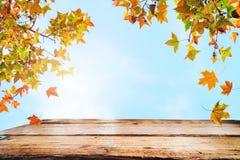 Деревянная таблица с красивым деревом клена осени Стоковое Изображение RF