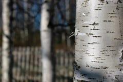 Деревянная текстура внешняя Стоковое Изображение