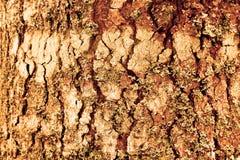 Деревянная текстура доски абстрактная предпосылка цветных барьеров с поверхностным деревянным grunge картины открытый космос и ил стоковое фото rf