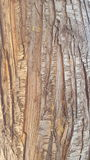 Деревянная текстура дерева стоковые фотографии rf