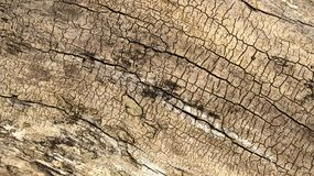Деревянная текстура журнала Стоковое фото RF