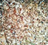 Деревянная текстура опилк стоковая фотография rf