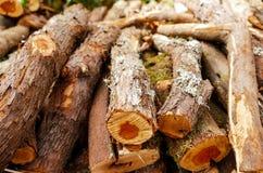 Деревянная текстура отрезанного ствола дерева иллюстрация вектора