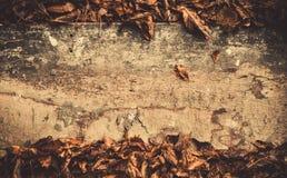 Деревянная текстура падения Стоковые Изображения RF