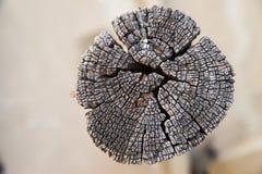 Деревянная текстура пня Стоковые Изображения RF
