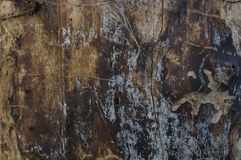 Деревянная текстура поврежденная жуком расшивы Стоковое Изображение RF
