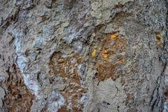 Деревянная текстура предпосылки расшивы Стоковое Изображение RF
