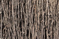 Деревянная текстура предпосылки ветви Стоковые Изображения