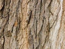 Деревянная текстура предпосылок Стоковое Изображение RF