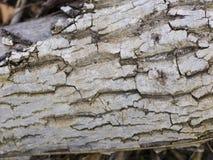 Деревянная текстура предпосылок Стоковые Фотографии RF