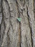 Деревянная текстура расшивы Стоковые Изображения RF