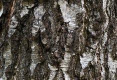 Деревянная текстура расшивы Стоковые Фотографии RF