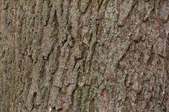 Деревянная текстура расшивы Стоковое фото RF