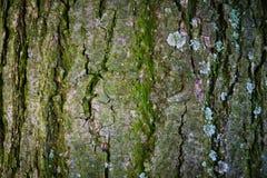 Деревянная текстура расшивы Стоковая Фотография