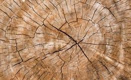 Деревянная текстура ствола дерева, текстура предпосылки Стоковые Фотографии RF