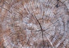 Деревянная текстура ствола дерева, текстура предпосылки Стоковая Фотография