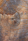 Деревянная текстура ствола дерева, текстура предпосылки Стоковые Изображения RF