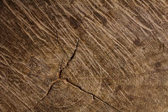 Деревянная текстура ствола дерева, текстура предпосылки Стоковое Изображение RF