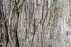 Деревянная текстура стены Стоковые Изображения RF