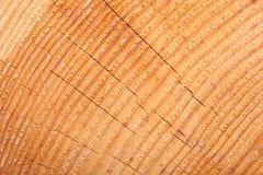 Деревянная текстура с годичными кольцами Стоковая Фотография