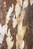 Деревянная текстура с естественной предпосылкой картин Стоковое Изображение